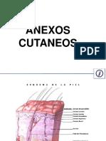 4 Anexos glandulares