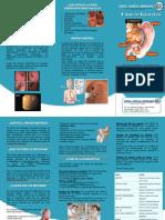 triptico cancer gastrico.docx