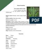 Plantas Pteridofitas.docx