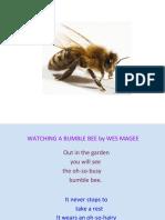 bee.pptx - CD.pptx