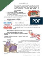 Material Apoio -tecido muscular