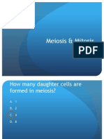 Hot Seat - Meiosis Mitosis _1