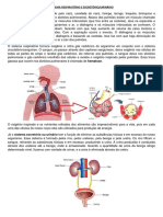 revisão_respiratório_excretório.docx