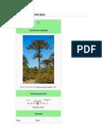Araucaria araucana chilena.docx