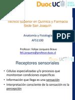 AFS1100 - Tema 7 Sentidos