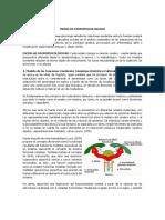 MODELOS NEUROPSICOLOGICOS.pdf