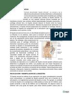 LIQUIDO_SINOVIAL.docx