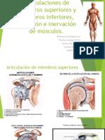 Anatomia [Autoguardado] (1)