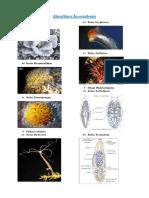 Klasifikasi Invertebrata Bio