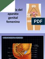 1 Anatomìa Del Aparato Genital Femenino (1)