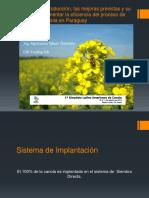 NILSON OSTERLEIN - Desarollo Da Producion Canola en Paraguay