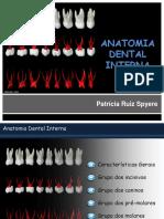 328875703-Anatomia-Dental-Interna-Endo - copia.pdf