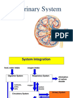 urinarysystem-