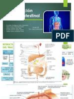 Trastornos de la función gastrointestinal