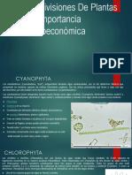 Divisiones en Plantas