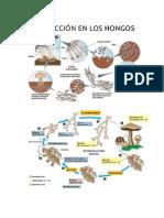 OBSERVACION DE CELULAS.docx