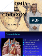 ANATOMIA DEL CORAZON - DR F FARFAN.pdf