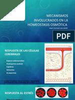 Homeostasis Osmotica