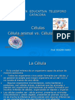 celulas-vegetal-y-animal.ppt
