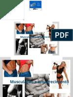Musculação e Emagrecimento.pdf