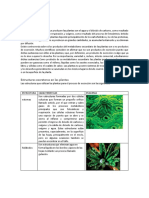guia   excreción  en plantas.docx