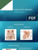 Presentación Eliminacion Urinaria-1