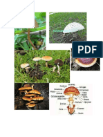 imagenes de hongos.docx