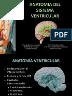 Evc adultos anatomia