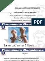 CLASE 3 DESARROLLO EMBRIONARIO DEL SISTEMA NERVIOSO.pdf