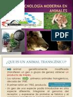 Biotecnología Moderna en Animales