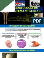 AULA TECIDOS MUSCULARES 2017 1S.pdf