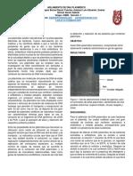 DNA-plasmídico.docx