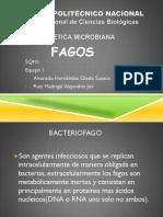 256780082-fagos