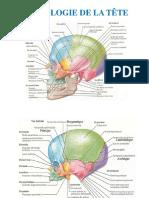 Os du crâne.pptx