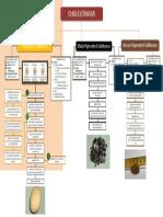 PPP - Cholelithiasis
