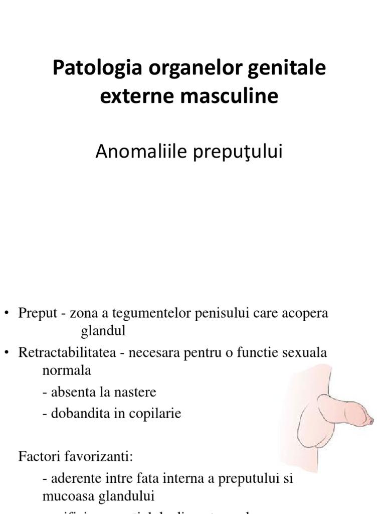 curbura normală a penisului)