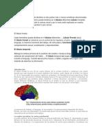 El cerebro humano.docx