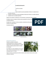 Caracterizacion Del Aceite de Eucalyptus