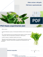 Medicine Herb and Herbal Pills PowerPoint Templates Standard