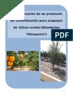 Informe de mandarina.docx
