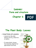 Chapter 6 Leaves.ppt