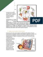 Cómo define a los receptores sensoriales.docx