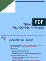 15 Relacion Animales Nervioso