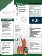 Triptico Softgels2.pdf