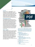stroke; brain attack.pdf