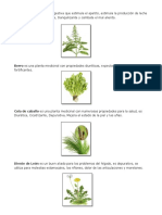 glosario de plantas.docx
