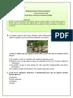 7° Básico diagnostico 2015.doc