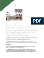 Clasificación de los mamíferos.docx