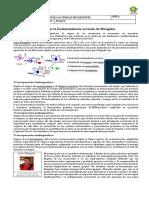 1° biología_ teoría del endosimbionte.docx
