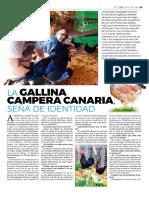 La Gallina Campera Canaria. GC Actualidad